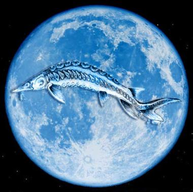 Full-Blue-Sturgeon